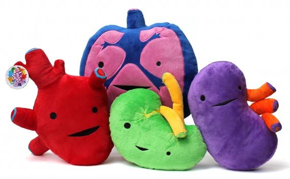игрушки в виде органов