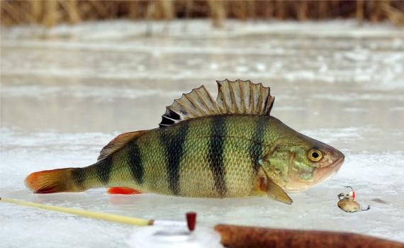 Как и где купить рыболовную удочку в интернет-магазине? как купить удочку