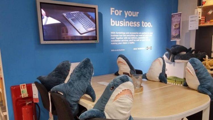 работающая акула